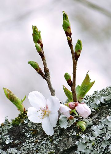 "~Spring Pirouettes~ ""Wilted or in bloom, taking or lending daylight, the world transitions."" ~ Richelle E. Goodrich"