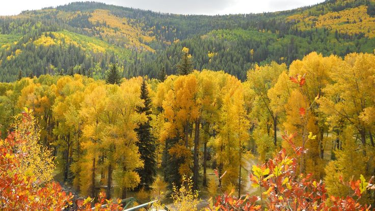 New Mexico aspens fall colors. Angel Fire Chamber of Commerce