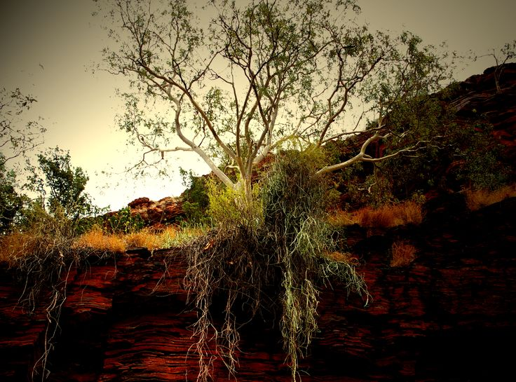 Karijini - Trees at Circular Pool growing at the top of the gorge