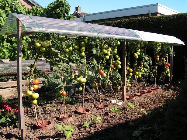 zelf een afdak maken voor tomaten en paprika's