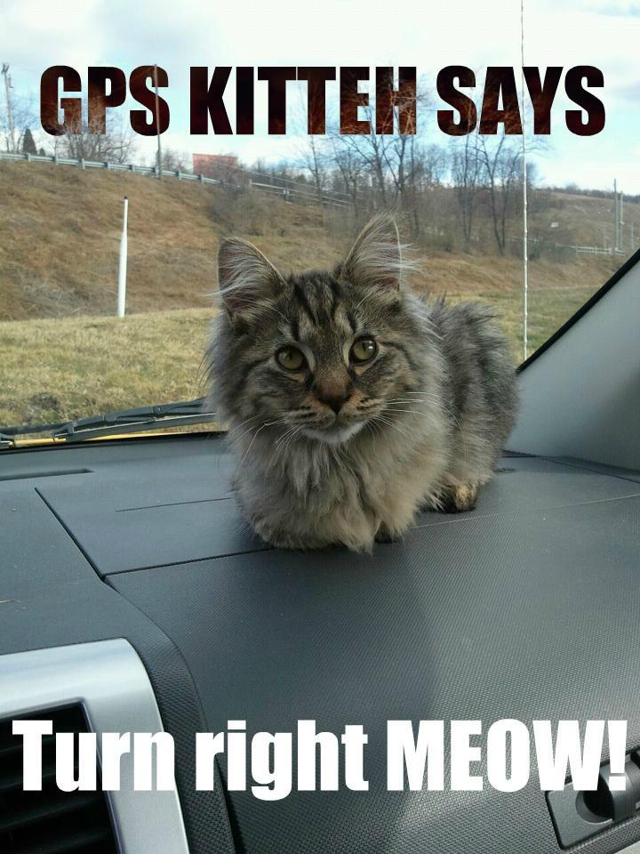 Funny Cat Lady Meme : Best cat memes images on pinterest funny stuff
