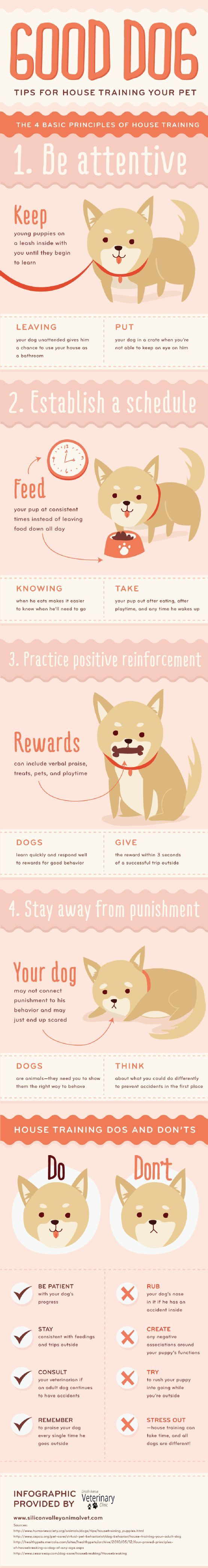 Handy infographic on how to house train your new pip! www.dobermanlabs.com