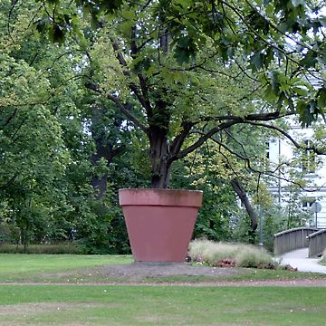 Timm Ulrichs, Hornbeam with Concrete Flower Pot, 1969
