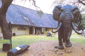 Visit the Elephant Hall to gain knowledge on these amazing animals.