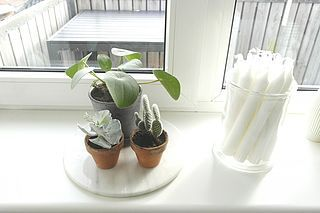 New in – skønne planter