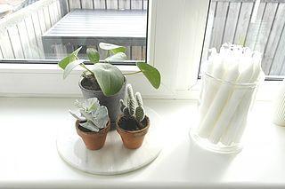 New in – skønne planter