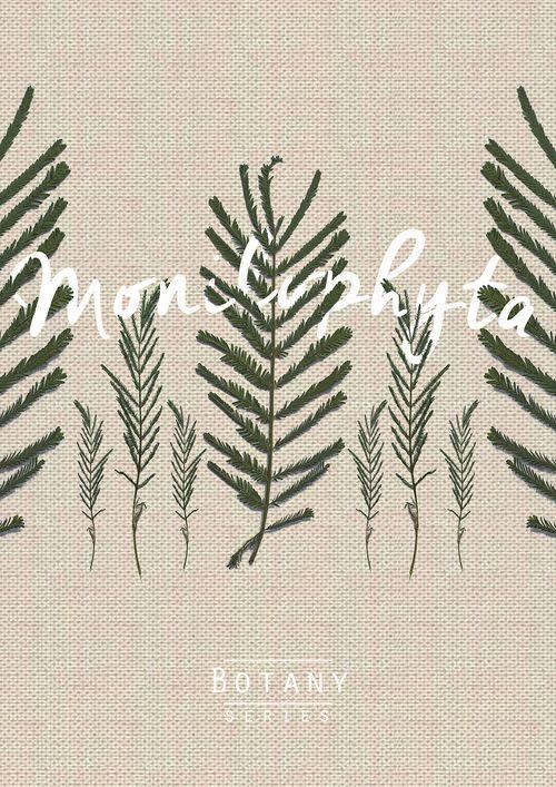 Botany series by Maria Scherlies