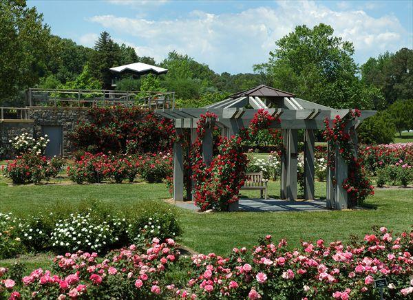 55 Best Norfolk Botanical Gardens Images On Pinterest Botanical Gardens Norfolk And Garden Roses