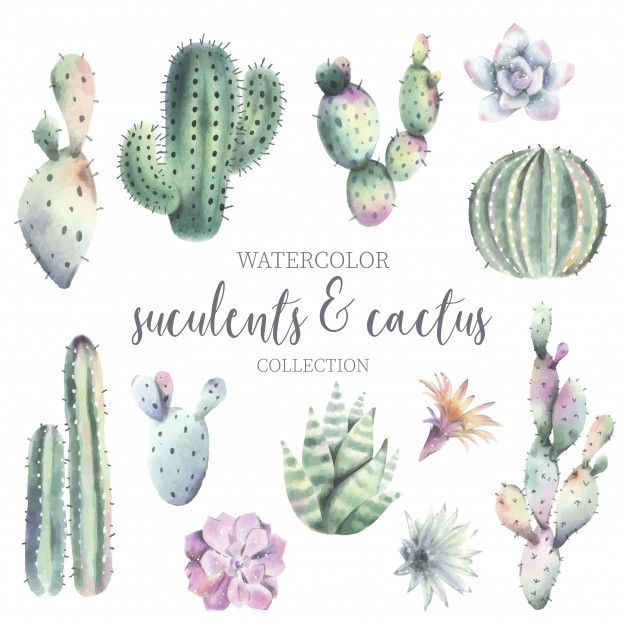 Download Cute Watercolor Cactus Suculent Collection For Free