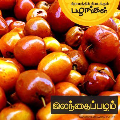 கிராமத்து பழங்கள் | அரிய பழங்கள் | செல்லமே செல்லம்