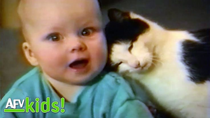 Cats Taking Care Of Babies | Cutest Pets | AFV Kids
