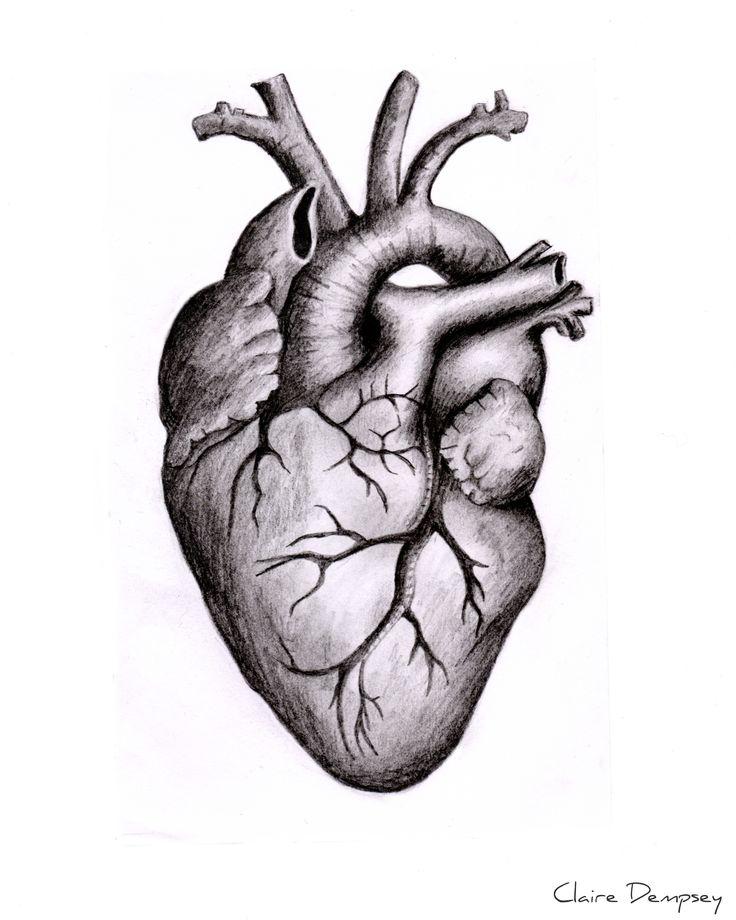 https://www.facebook.com/clairedempseyphoto #heart #drawing #sketch #art…