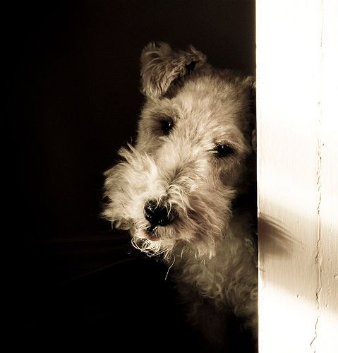A Fox Terrier named Chester.  PLEASE