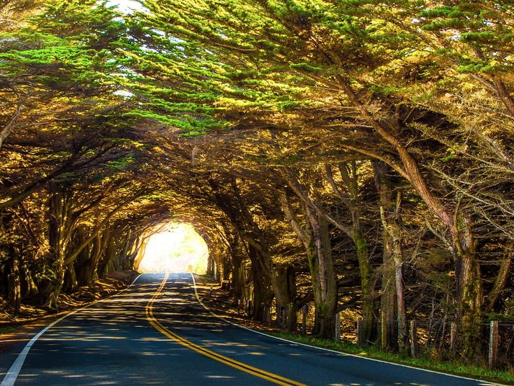 (Highway 1) North of MacKerricher State Park, Fort Bragg, California - a tree tunnel!