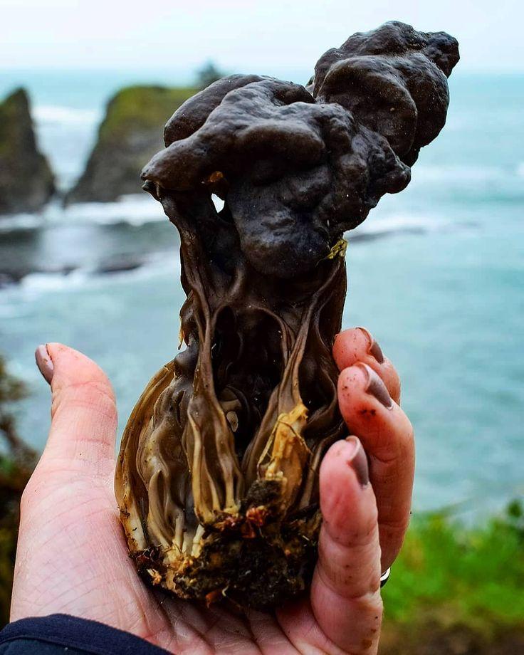 Mushrooms   Fungi   Fungus (@youfungus) • Instagram photos and videos