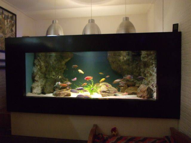 1000 images about aquarium 2014 on pinterest for Plywood fish tank