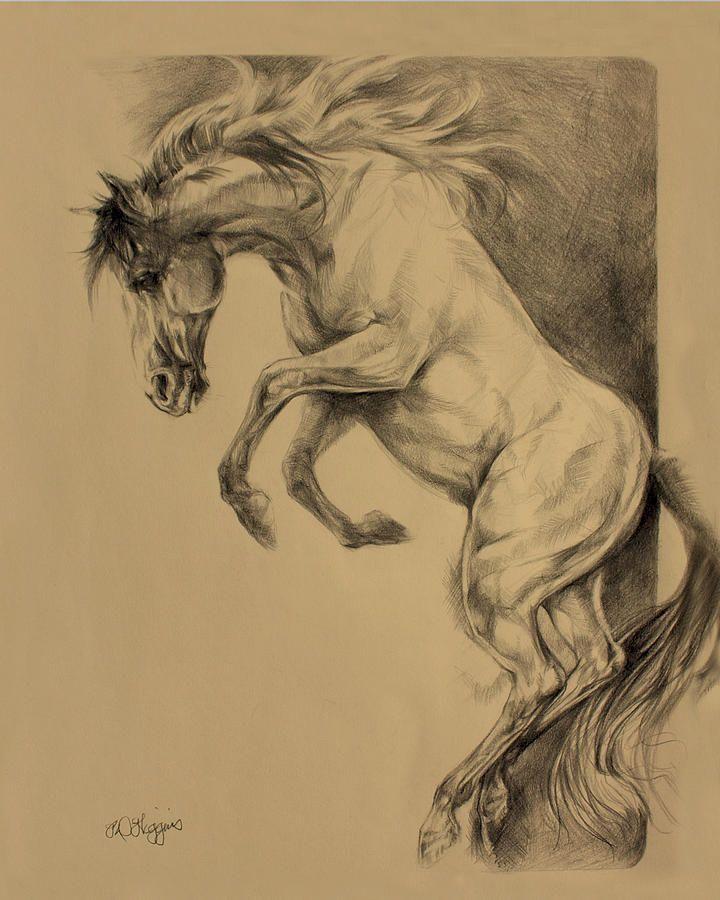 Rearing Horse Drawing | Mustang Rearing Drawing Derrick Higgins Fine Art