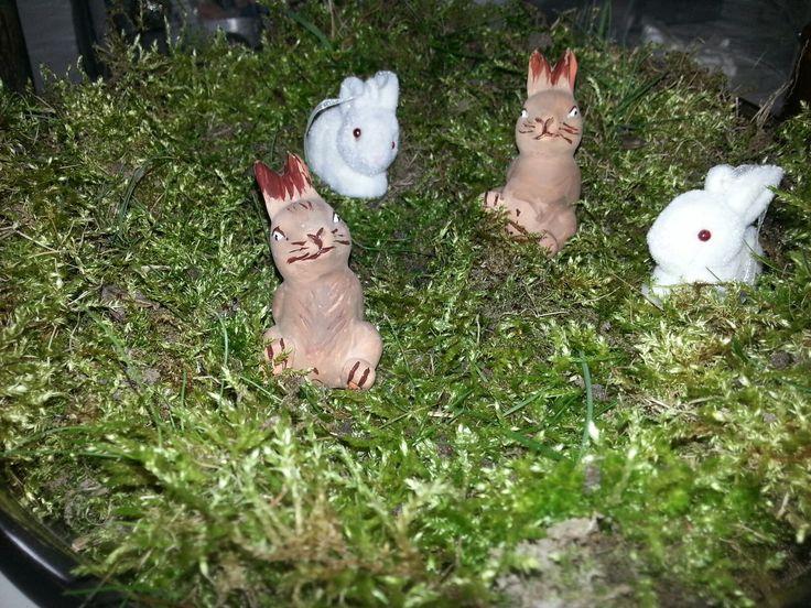 Wat doe je met al het mos in de tuin .Je maakt er een decotatiestuk van .Je neemt een mooie schaal .Deze is een zilveren op voet ,mag ook in glas of andere materie.Je legt het mos erop en versier deze met konijntjes (2 bruine zelf geschildert komt uit Action )De witte konijntjes komen uit intratuin .Leg er dan ook nog wat scharrel eitjes bij die je aankoopt of zelf uiblaast samen met kids of zonder.Dit doe je pas 2 weken voor pasen .Veel plezier !