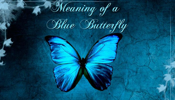 Meaning of a Blue Butterfly. There could be different reasons that you want to discover the symbolism of the blue butterfly came into your life to help you
