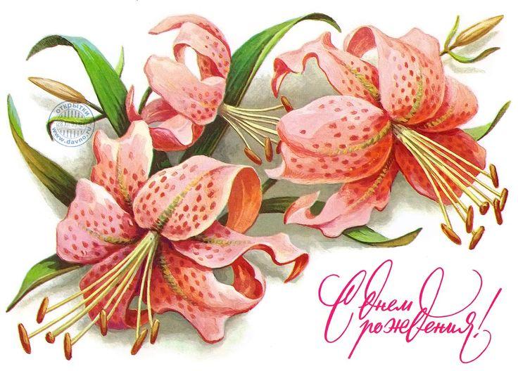 Красивые рисованные открытки цветы похожие на лилии с днем учителя, днем