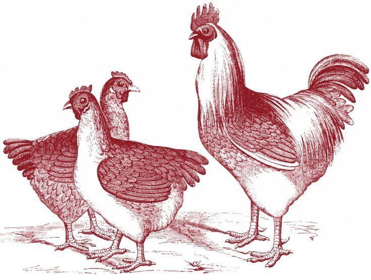 25+ Best Ideas about Vintage Chicken Art on Pinterest | Rooster ...
