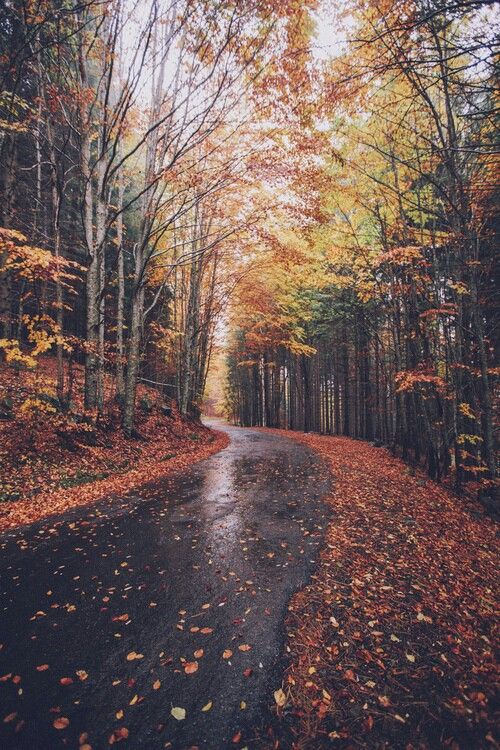 I want to be driving down this road to a little cottage with a fireplace!