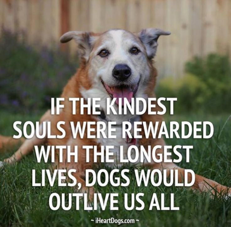 If the kindest souls were rewarded with the longest lives, dogs would outlive us all. http://iheartdogs.com