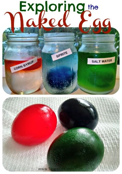 Make naked eggs and see how they change in different liquids. // Huevos duros con diferentes líquidos que cambian de color #science #eggs #biology