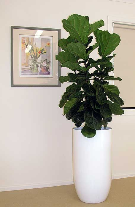 22 best floor plants and planters images on pinterest for Green floor plant