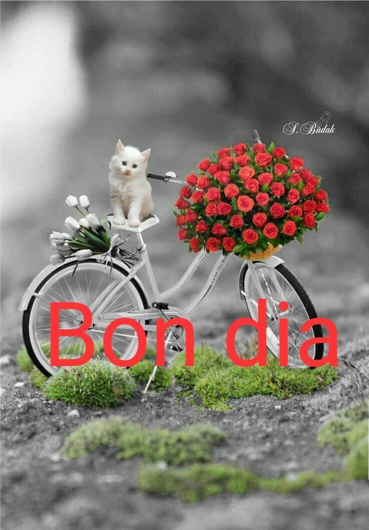 Bon dia | Saludos d buenos dias, Saludos de buenas noches, Saludos ...