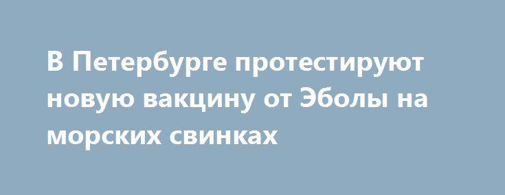 В Петербурге протестируют новую вакцину от Эболы на морских свинках https://apral.ru/2017/07/18/v-peterburge-protestiruyut-novuyu-vaktsinu-ot-eboly-na-morskih-svinkah.html  Научно-исследовательский институт Санкт-Петербурга опубликовал на своем сайте вакансии для ученых, желающих принять участие в тестировании новой вакцины от Эболы. Отмечается, в качестве подопытных специалисты будут использовать морских свинок. Согласно опубликованным данным, работа ученых будет оценена в 8 миллионов…