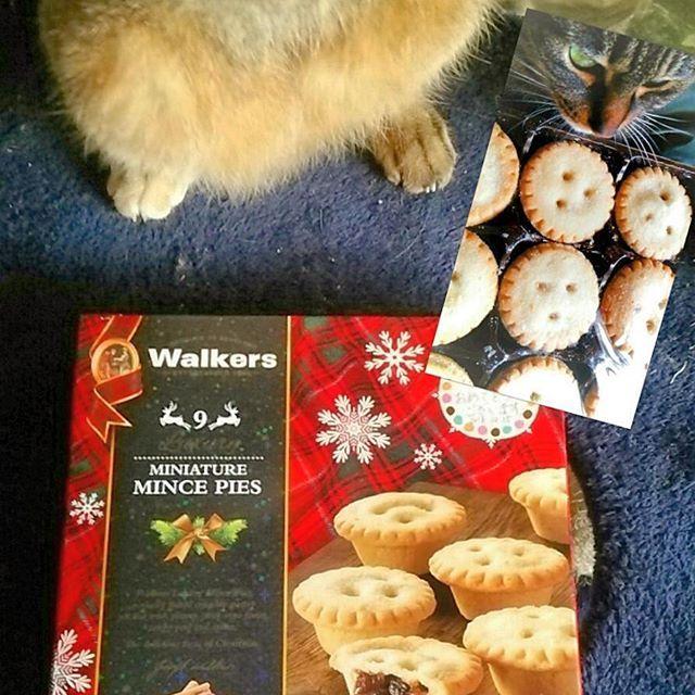 #ミンスミートタルト って初めて(*゚Д゚*) スコットランドではクリスマスに伝統的に食べられてるらしい🎄 ちびは何をしとるかというと、パンストで遊んでます🎣 #ミンスパイ#スコットランド銘菓#ウォーカー#ミニミンスミートタルト#スイーツ#sweets#タルト#tarteret#pie#present#パイ#焼菓子#ドライフルーツ#スパイス#イギリス産#輸入菓子#ミートは入ってないぽい#今日食べないと意味ないのかな#もらったし一応開けた#プレゼント#ちびてん#ねこ#猫#cats#ペット#愛猫#猫の腹