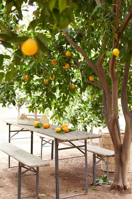Remarkable  Best Images About Garden  Citrus On Pinterest  Gardens  With Great Nothing Is Better Than That First Sunny Warm Weekend In Early Spring You  Slip On The Grubby Garden Shoes Like A Broken In Pair Of Bed With Awesome Jade Garden Headford Also Secret Garden Pub In Addition Springfield Garden Centre Spalding And Kemps Garden Centre As Well As Waterproof Garden Furniture Covers Additionally Lound Garden Centre From Pinterestcom With   Great  Best Images About Garden  Citrus On Pinterest  Gardens  With Awesome Nothing Is Better Than That First Sunny Warm Weekend In Early Spring You  Slip On The Grubby Garden Shoes Like A Broken In Pair Of Bed And Remarkable Jade Garden Headford Also Secret Garden Pub In Addition Springfield Garden Centre Spalding From Pinterestcom