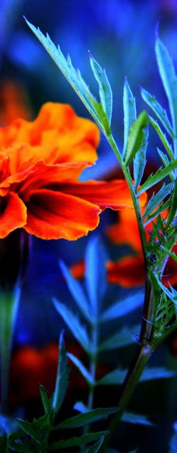 blue orange wallpaper