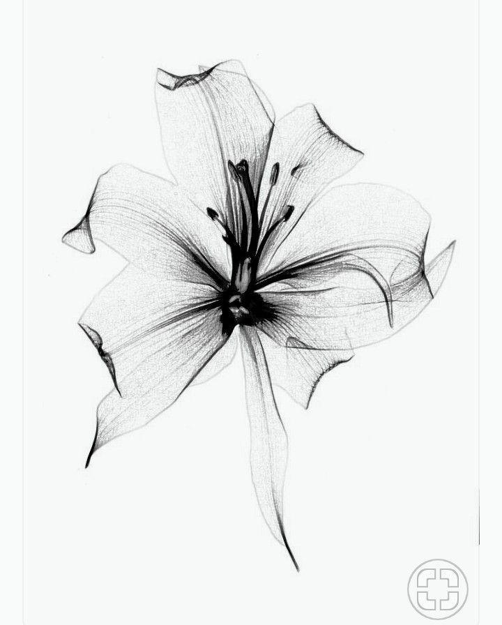 Blumentattoo sehr leicht Und vielleicht so eine Blume für meinen Vater    #tatt…