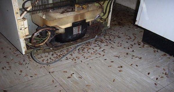 Un moyen efficace pour faire fuir toutes les blattes de votre maison!