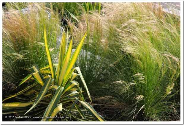 Ornamental Grasses Victoria Bc : Images about ornamental grasses on