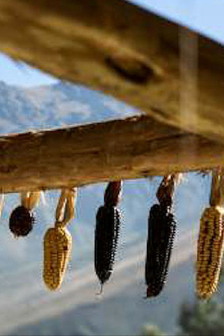 Not normally a lover of corn? We'll we promise there is a corn type that will suit your tastes in the Sacred Valley. Corn is never compulsory but trying everything  at least once is. Otherwise, what is the purpose of life?