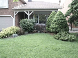 Before Front yard