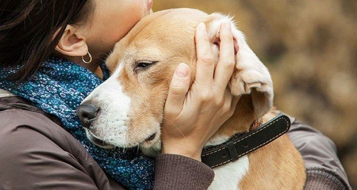 How to euthanize a dog at home without a vet 2020 aug