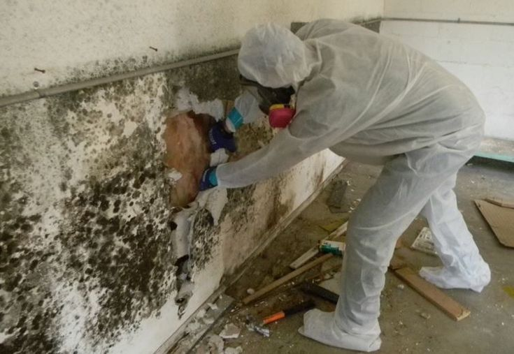 Unfortunately, Mold usually starts in places you cannot