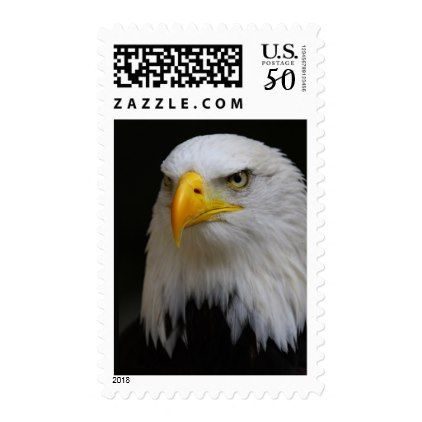 Eagle Postage Stamp Bald Eagle Bird Close Up - photography gifts diy custom unique special