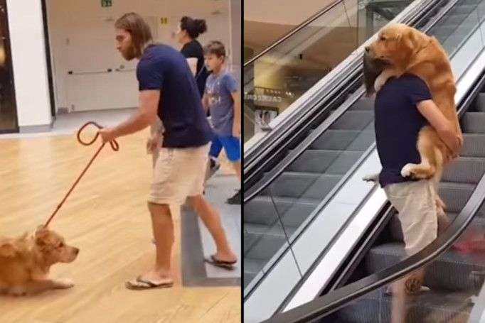 Man Carries His Dog Up Escalator After It Gets Scared Ladbible Dogs Escalator Funny Animals With Captions