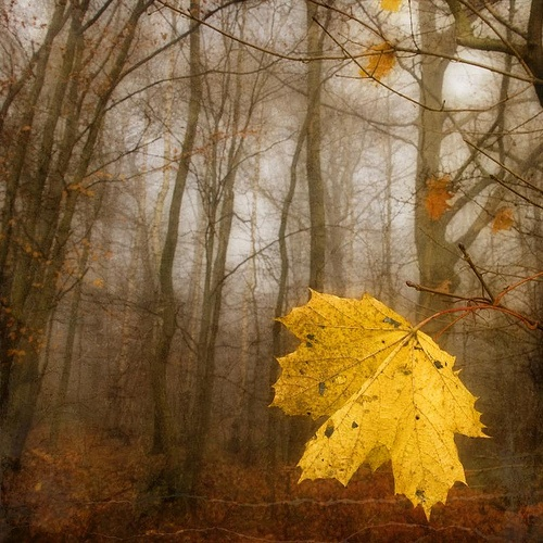 Autumn in Northern Europe