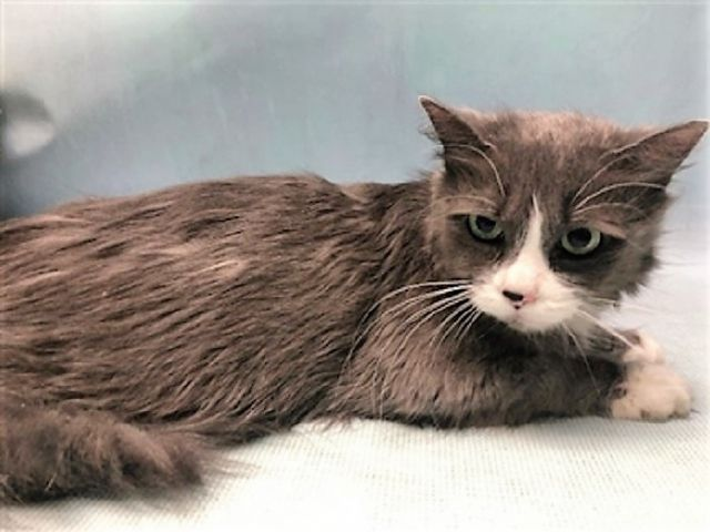 Urgent Daisy 25227 Daisy Was An Owner Surrender She Has A Wound On Her Nailbed On Her Right Hind Leg She Is A Bit Shut Down And Needs A N Cute