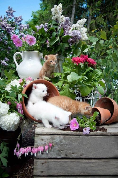 """* * """" Are we in troubles? """"   [ORANGE KITTEN: """"Maybe, but dey shouldn'ts haz put dis here on display fer us to checks it out."""""""
