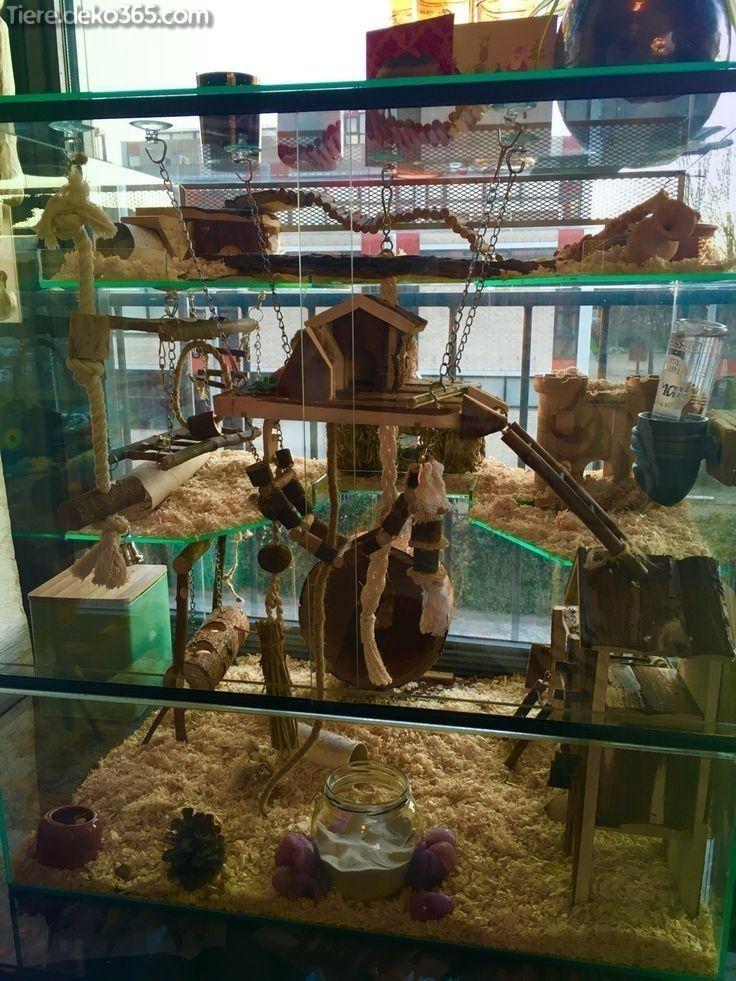 Dies Beste Hamsterhaus Dasjenige Sie Jetzt Erstellen Konnen Hamster House Pet Mice Hamster Cages