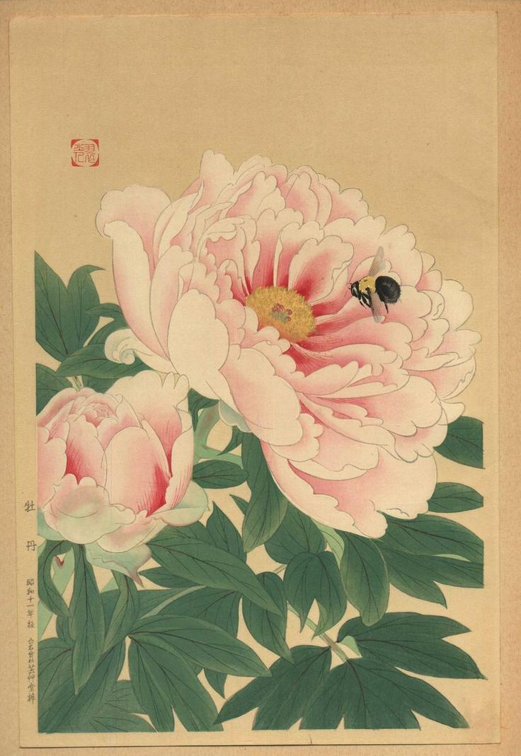 Fukuda_Suiko-No_Series-Peony_and_Bee-00034592-030708-F12.jpg (826×1200)