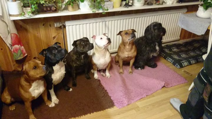 Hp Stolpe Staffy Instagram Winnie The Staffy Gang Is Testing The