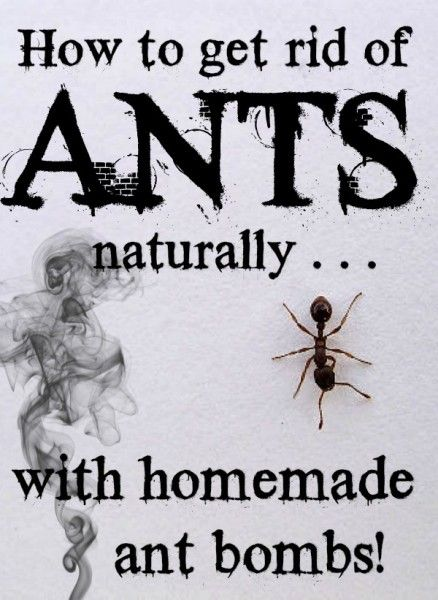 Best 25 ant pest control ideas on pinterest natural bug killer how to get rid of ants naturally with homemade ant bombs jen at dapperhouse ccuart Choice Image